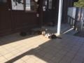 [猫][野良猫][田代島]猫いっぱい 食事編