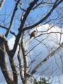 [田代島]鳥