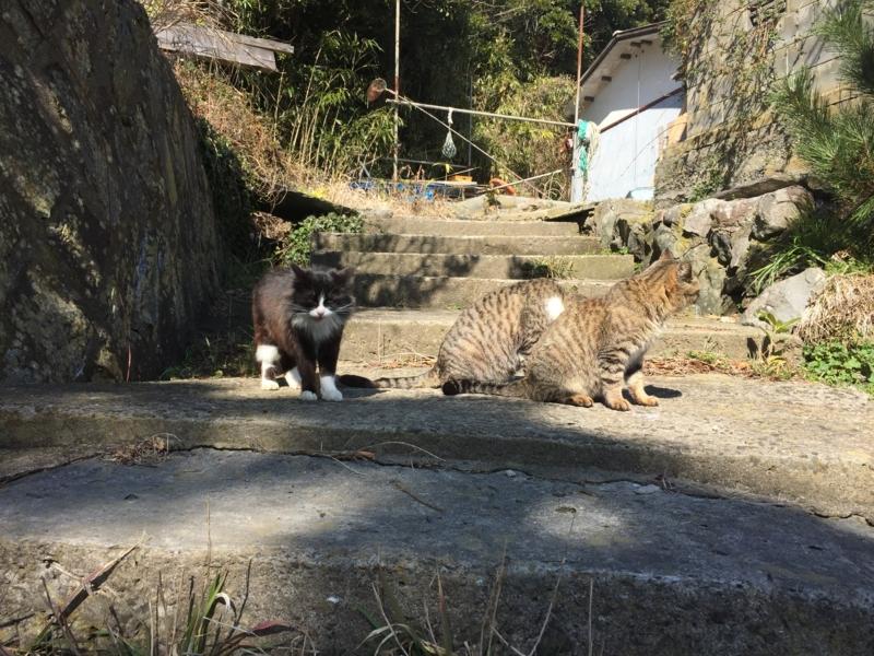 猫いっぱい9
