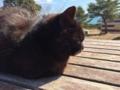 [猫][野良猫][田代島]猫5