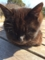 猫6 この猫と一番仲良くなった