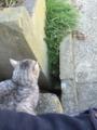 猫8 隣に座ってきた