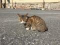 [猫][野良猫][田代島]猫8
