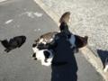 [猫][野良猫][田代島]猫いっぱい10