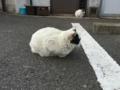 [猫][野良猫]