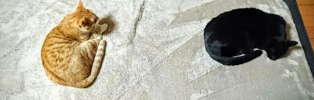 f:id:kuu1019:20161103095909j:plain