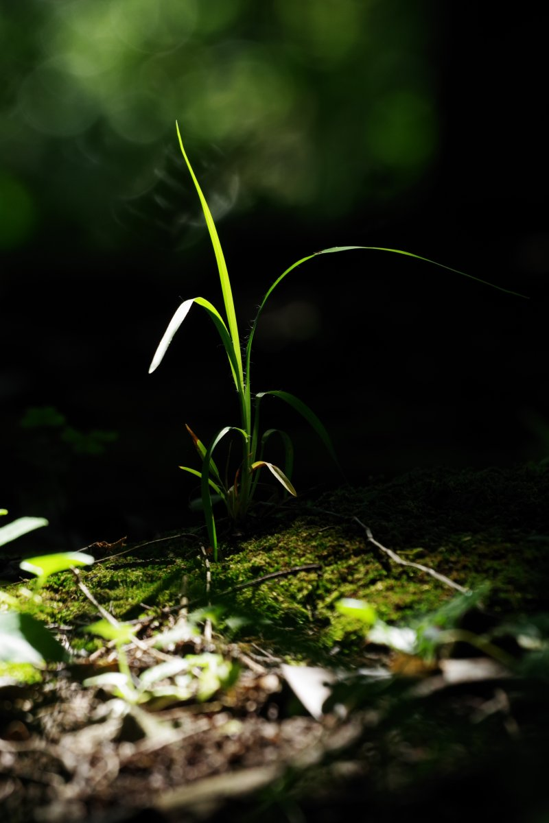夏草をちぎれば匂ふ生きに生きん 細見綾子