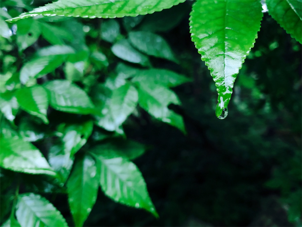 iphoneで撮影した葉っぱの写真