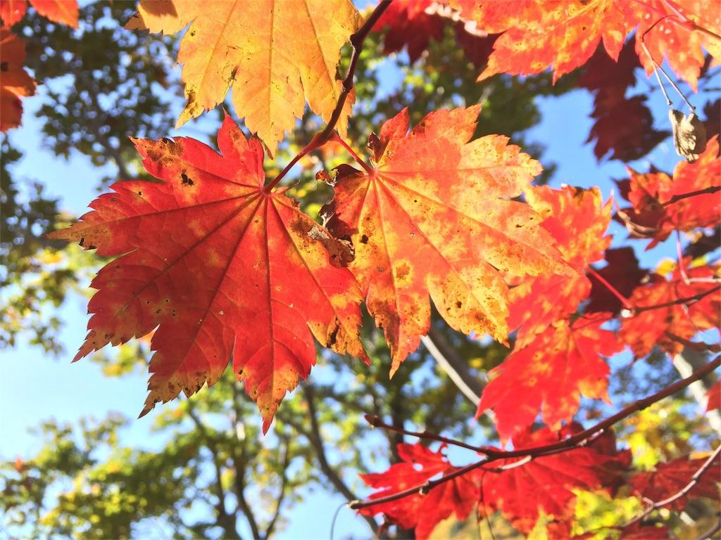 赤く色づいた山の紅葉