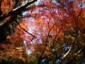 [奈良][紅葉][春日山原始林]