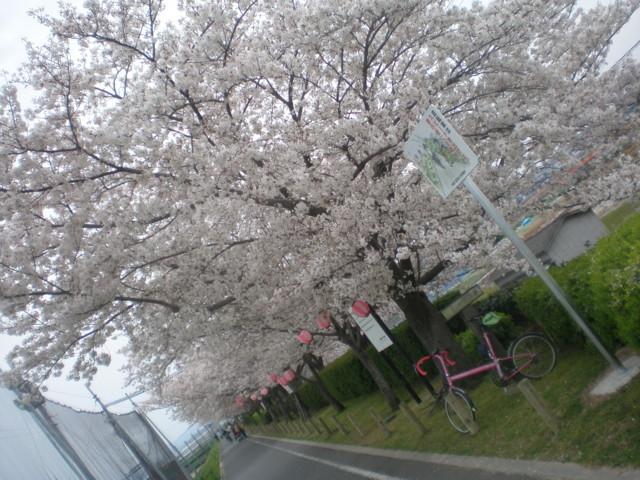 2010/04/05 石川サイクリングロードにて