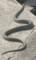 [蛇][snake]