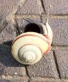 20101112121938