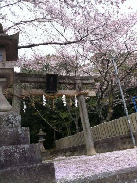 [奈良][桜][神社]
