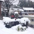 [2014/2/14][奈良][雪]