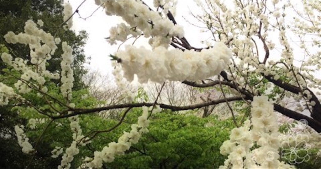 f:id:kuzunatsu:20170418125229j:image