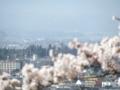 飯盛山から鶴ヶ城16-04-13