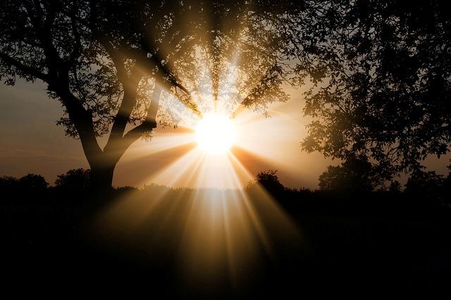 木々の間から覗く太陽