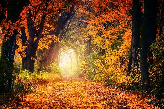 落ち葉降り積もる紅葉した森