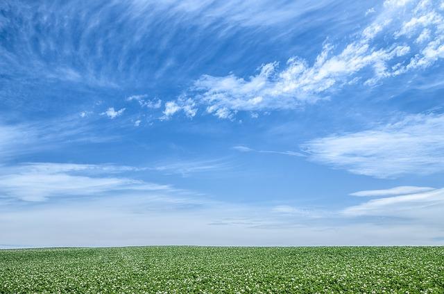 青空と草原が広がる風景