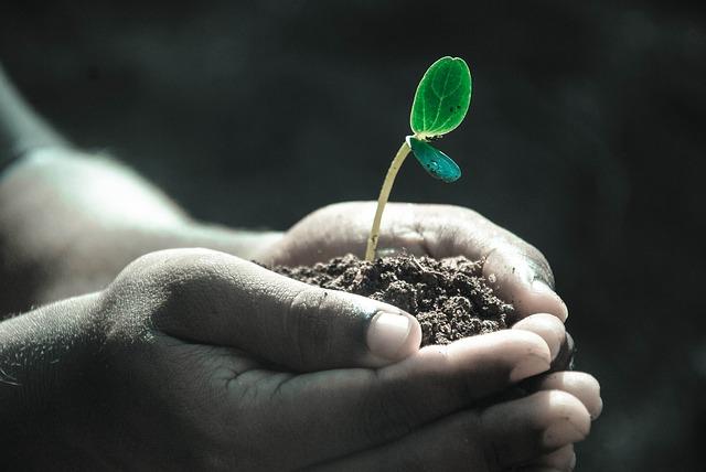 植物の萌芽
