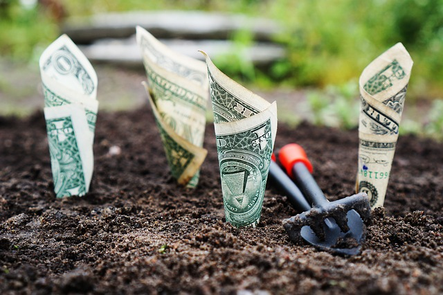 紙幣を土に植えて育てている