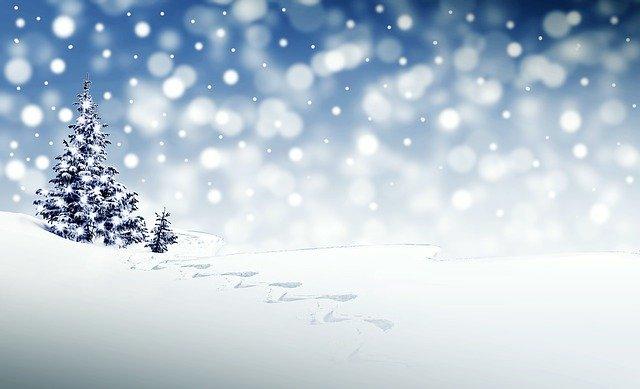 もみの木と雪原
