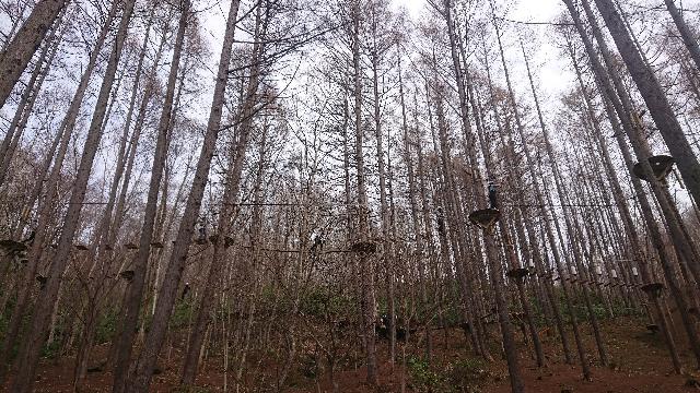 野外アドベンチャーパーク北湯沢の木の上に張り巡らされたアスレチック施設