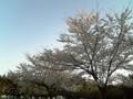 桜4/10