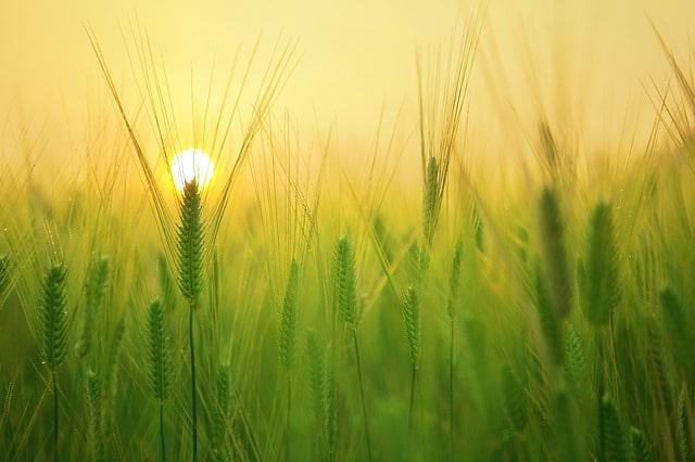 夕暮れ時にそびえたつ草