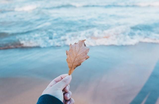 一枚の葉っぱを持つ手