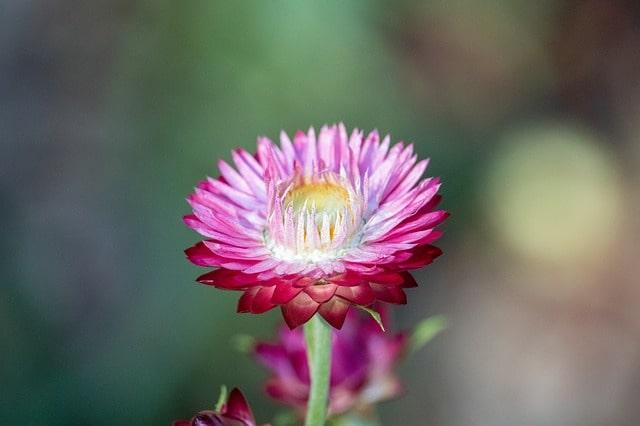 綺麗な色の花