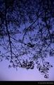 [MINOLTA X-700][Kodak EPN][Film][28-70mm][夕方][シルエット]深海