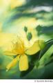 [Nikon FE][TAMRON 初代SP90mm Model 52B][Velvia][リバーサルフィルム][ビジョヤナギ][花]ひかり