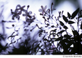[Nikon FE][TAMRON 初代SP90mm Model 52B][Velvia][リバーサルフィルム][ジャスミン][花]ひかり