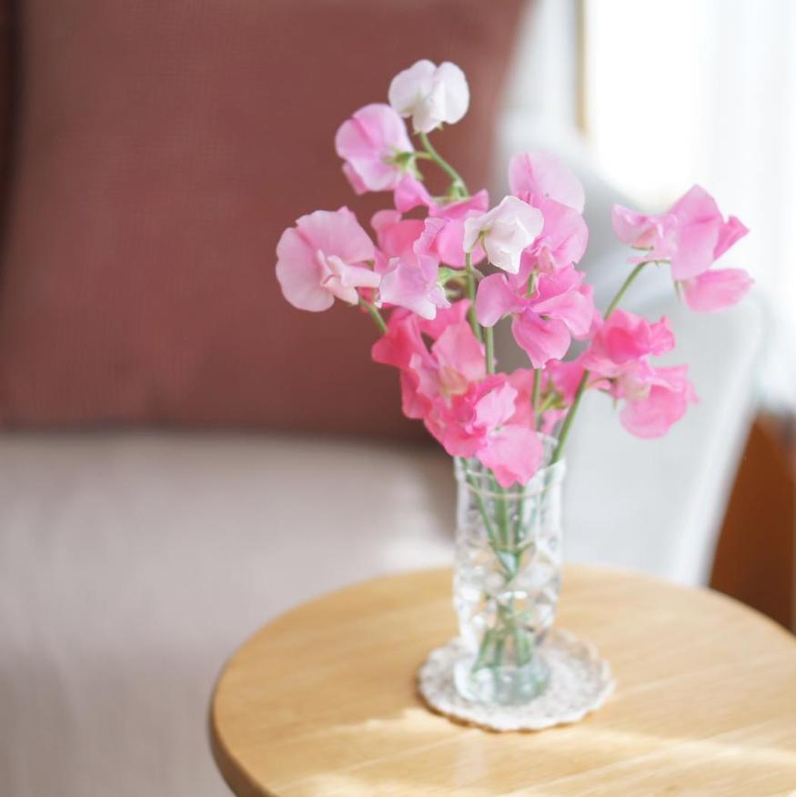 スイートピー 花 言葉 スイートピーの花言葉とは?色や種類は?開花時期と見頃の季節は?