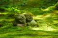 京都新聞写真コンテスト 木漏れ日