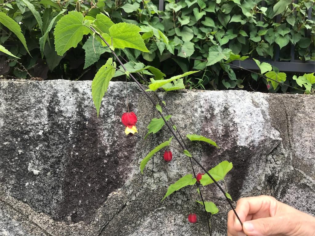 f:id:kyohei0212:20170714210034j:image