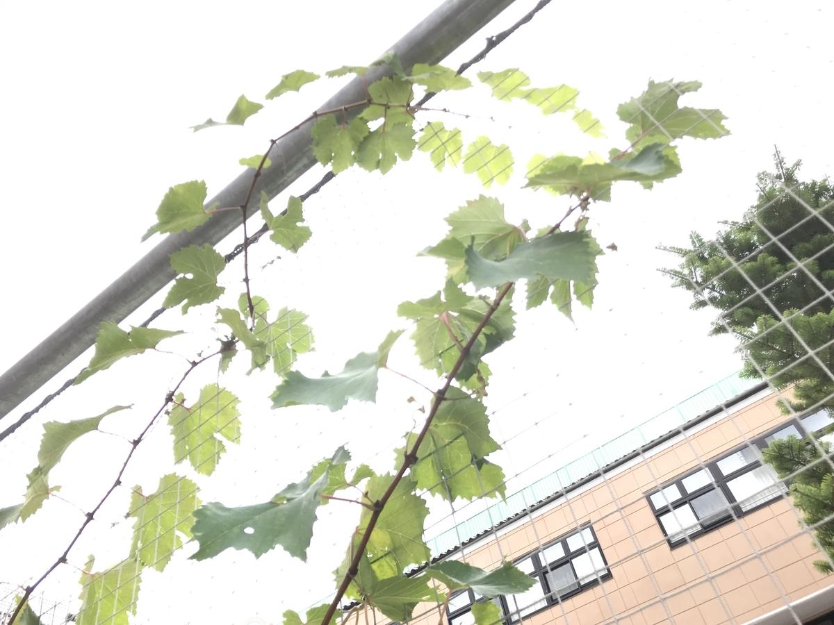 f:id:kyohhokukyohhokukyohhoku:20211015125544j:plain