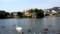 2011-5弁天池のスワン