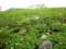 高山植物が咲く室堂平