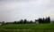 防風林のある農家の風景