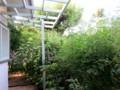繁り過ぎた庭の野菜