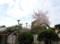 仁川北の住宅地の桜