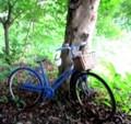 碧い自転車