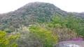 新緑の甲山