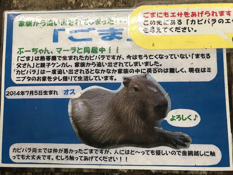 f:id:kyoko1003:20171015221555j:plain