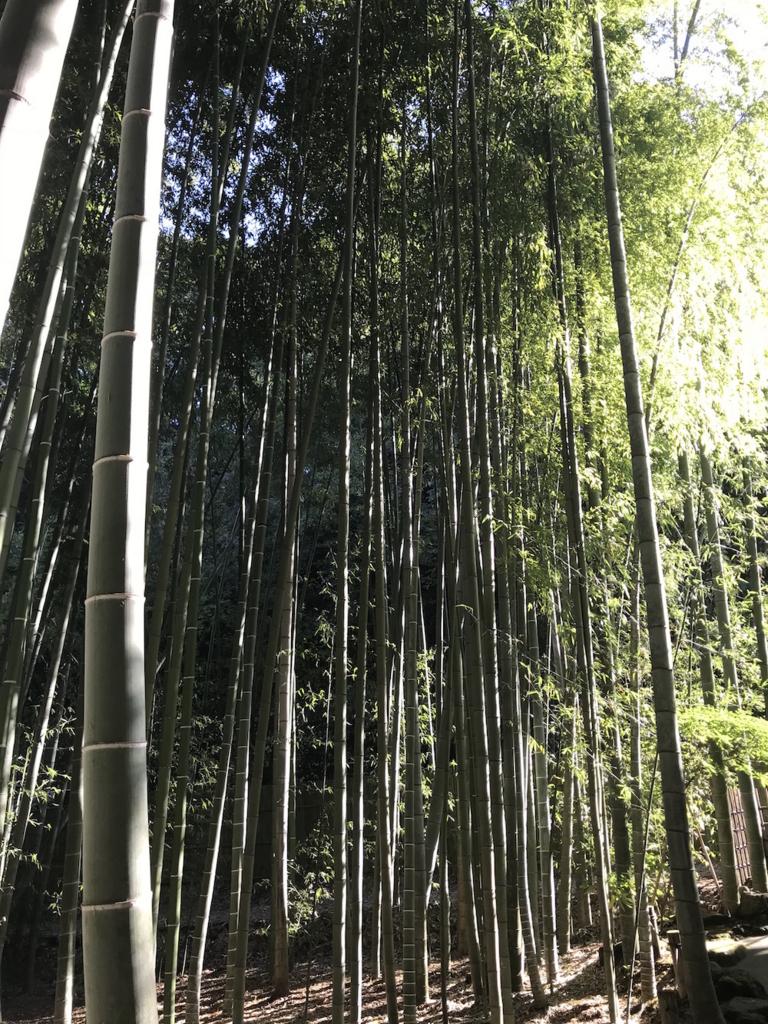 f:id:kyoko1003:20171105235135j:plain