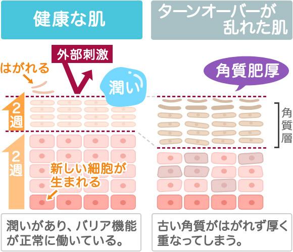 f:id:kyokocanarysan:20171116225203j:plain