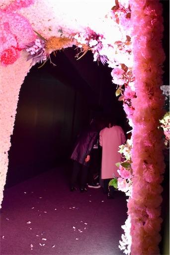 f:id:kyokocanarysan:20190321013850j:image